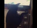 неуклюжий кот