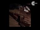 Стрельба в Ярцево-Ярцево