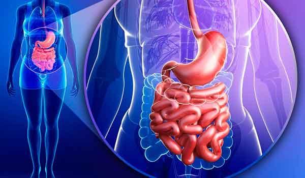 Болезни пищеварительной системы обычно напрямую связаны с тем, что и как человек ест. Регулярность приема пищи, баланс .