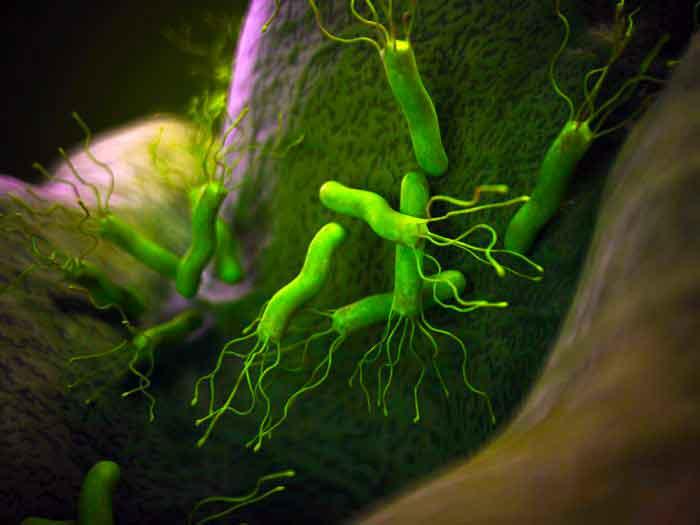 Одним из самых опасных заболеваний, передающихся через пищеварительную систему, является ботулизм. Болезнь проявляется через несколько ...