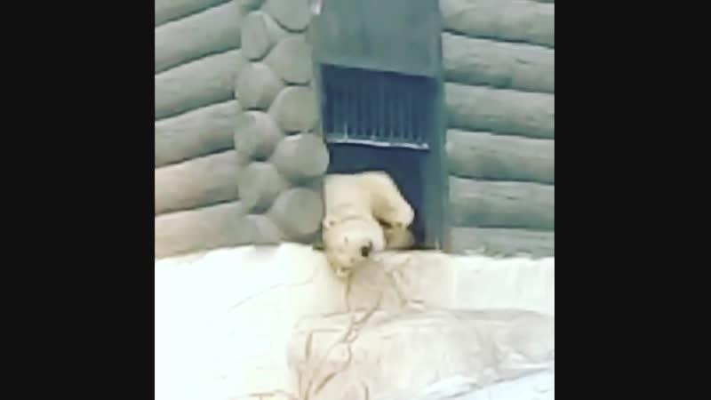 Медведь Хабар @medvedkhabar Фото и видео в Instagram
