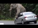 Юмор - Humor | короткие смешные видео - lustige Videos