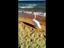 15 октября на пляже Евпатории