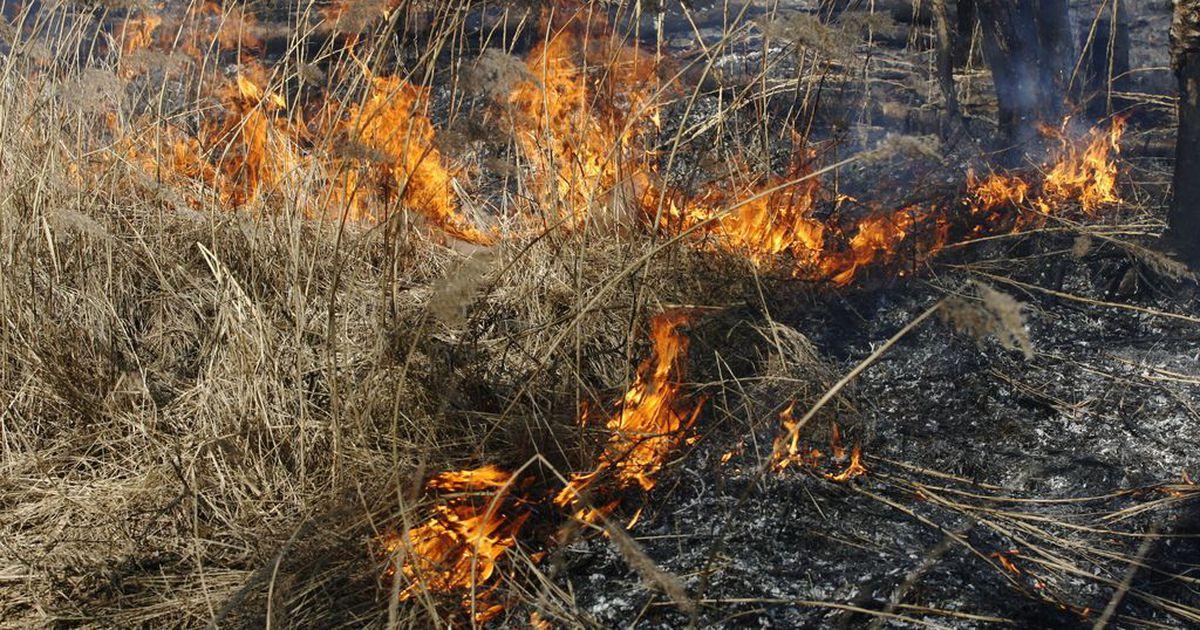 В Армянске засуха горят дачи