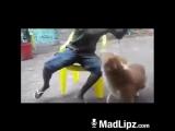 Dala U Crew - You see this Dog... Whatsapp your