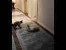 Кот сломался, несите нового