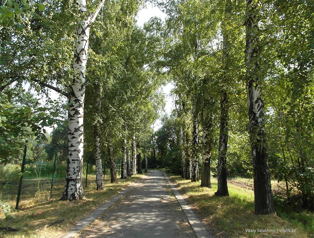Березовая аллея, Ботанический сад Алматы 2018