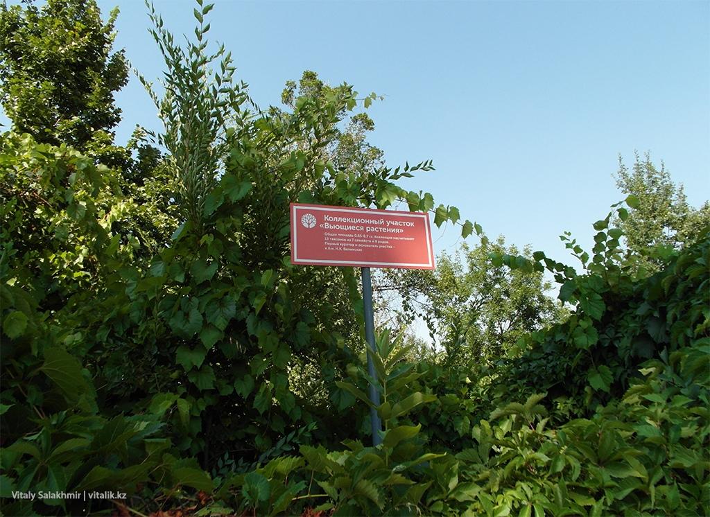 Экспозиция вьющиеся растения Ботанический сад Алматы 2018