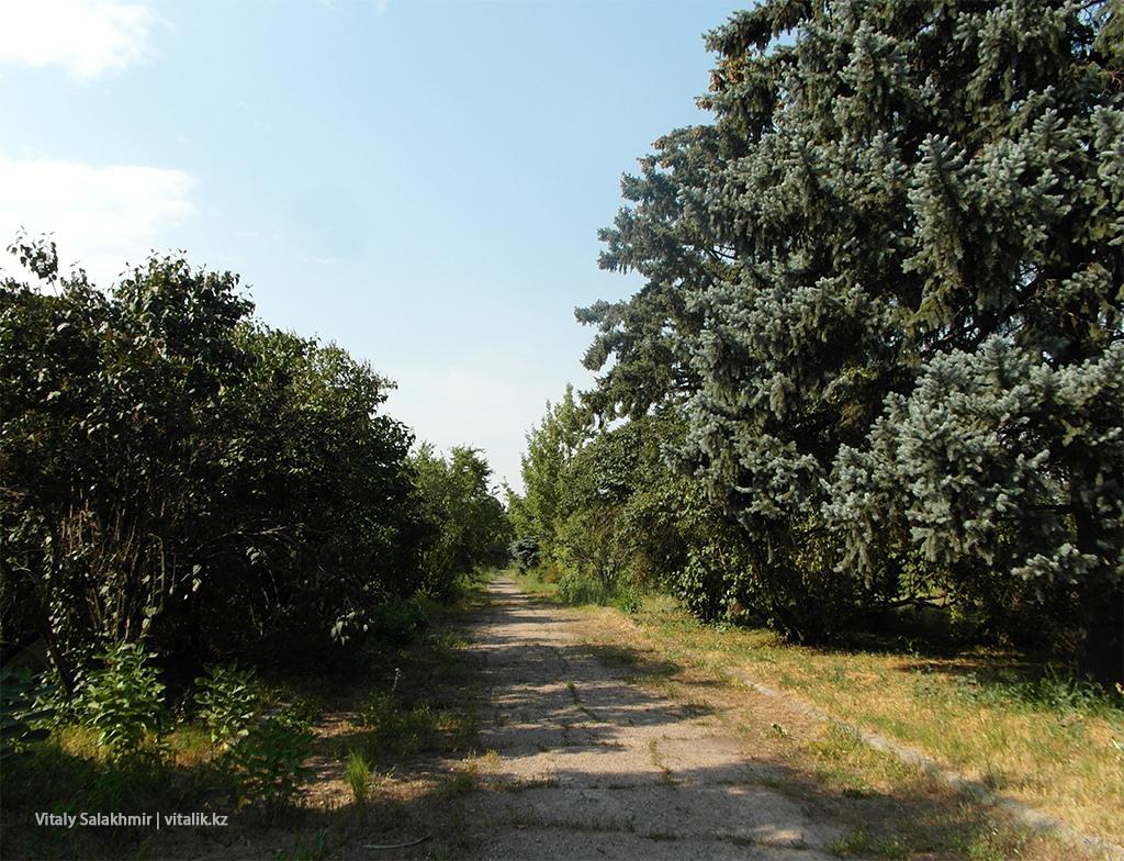 Голубые ели, Ботанический сад Алматы 2018