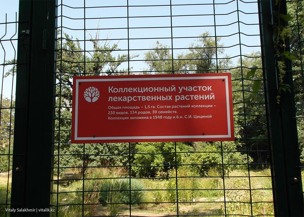 Коллекционный участок в Ботаническом саду Алматы 2018