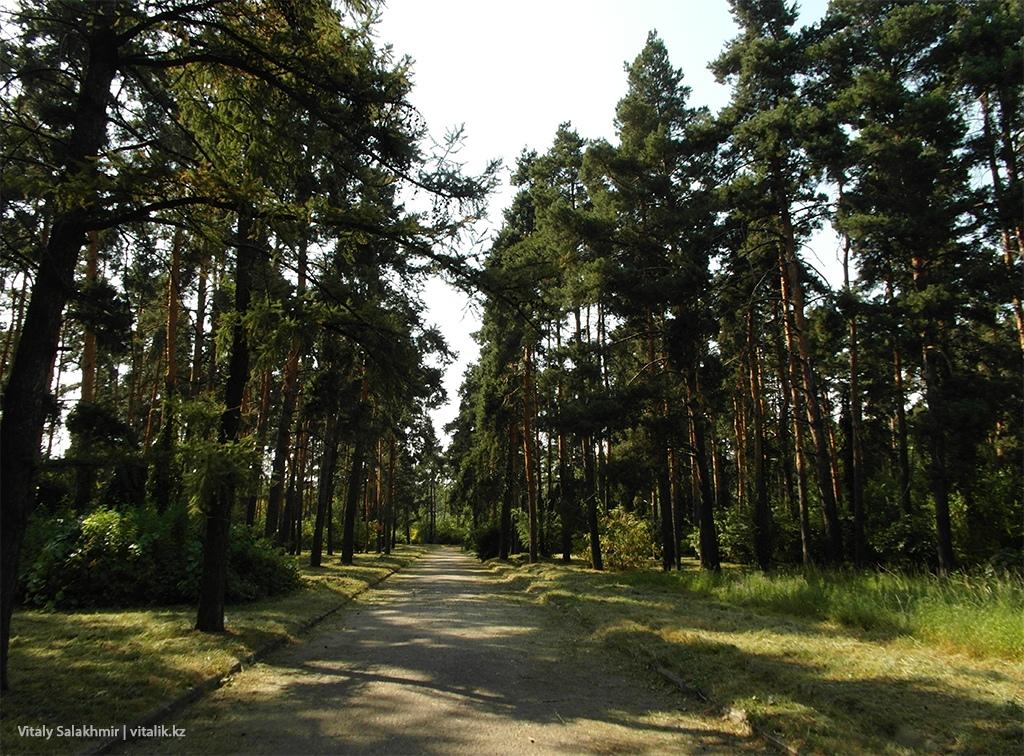 Аллея по пути обратно, Ботанический сад Алматы 2018