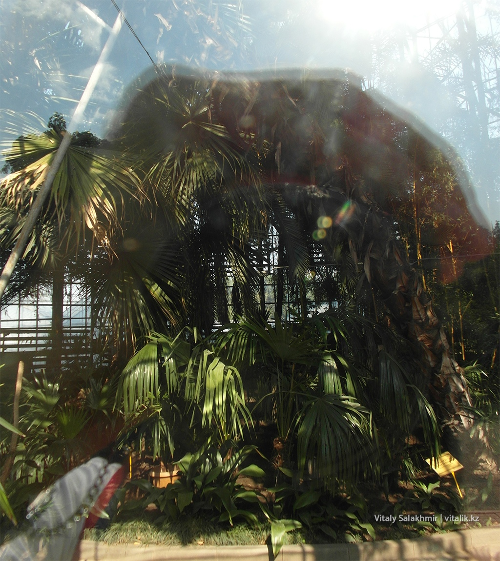 Оранжерея Ботанического сада снаружи, 2018