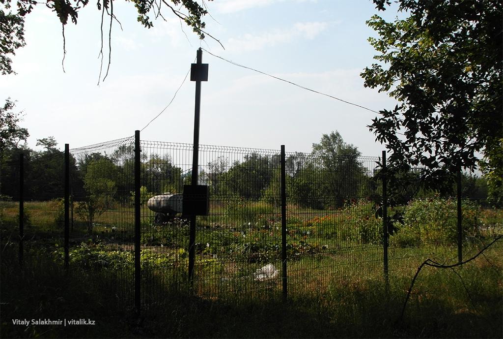 Рассада в Ботаническом саду Алматы 2018