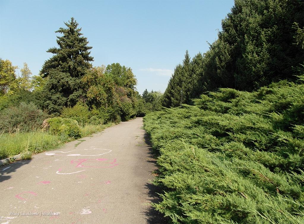 Хвойные заросли, Ботанический сад Алматы 2018
