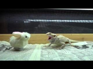 Заяц шугает рептилоида