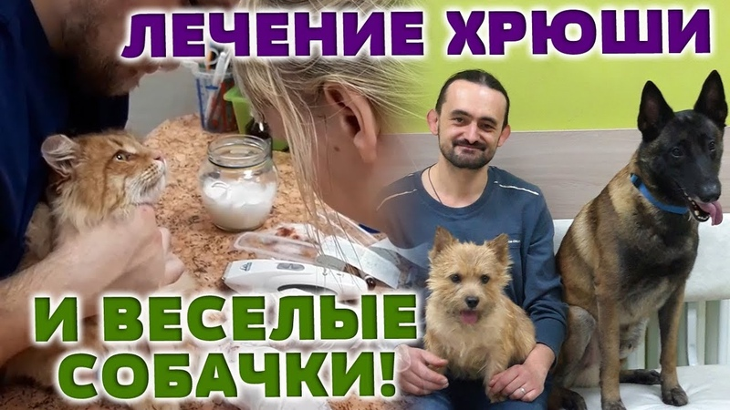 Лечение Хрюши и веселые собачки! ◆ ВИДЕООТЧЕТ 12.12.18