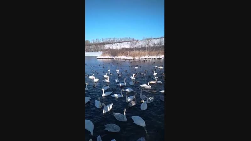 Алтайский край, Лебединое озеро, не замерзает и зимой