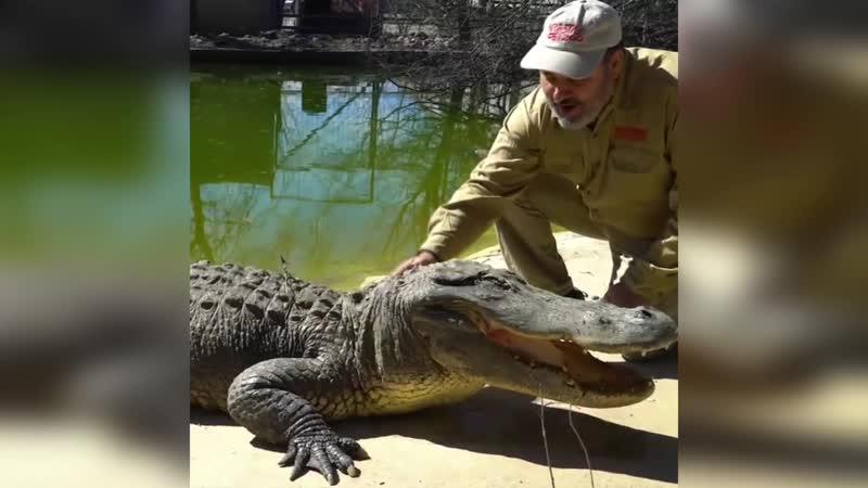 Погладить аллигатора и остаться в живых