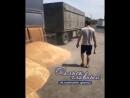 Высыпал зерно на дорогу.Сальск главный