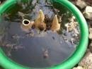 мини басейн и лягушки
