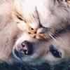 Спасение животных в Бобруйске