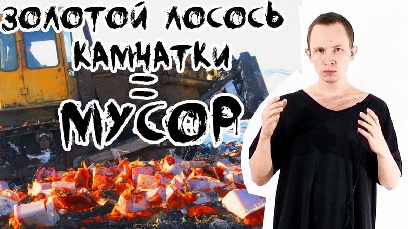 Петропавловск Камчатский Тонны лосося на свалках Камчатки, уничтожают икру, рыбу лосось на камчатке