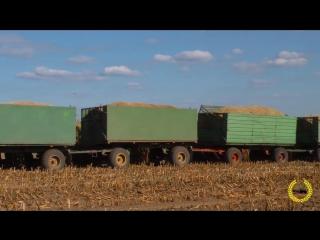 Road Train - Fendt 1050 Vario - 10 X HW80 - Gewicht 118 Tonnen - Gut Grambow - Maisernte 2018