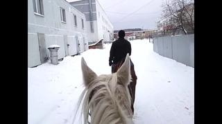 Конями, против высокой стоимости бензина