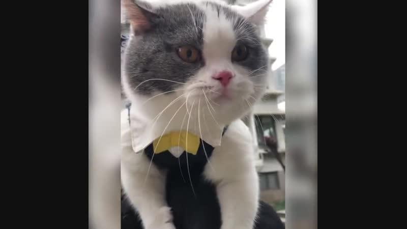 Разговорчивый котейка
