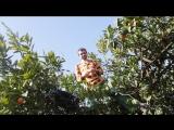 Абхазия Дом Сыроедов Мандариновое Дерево