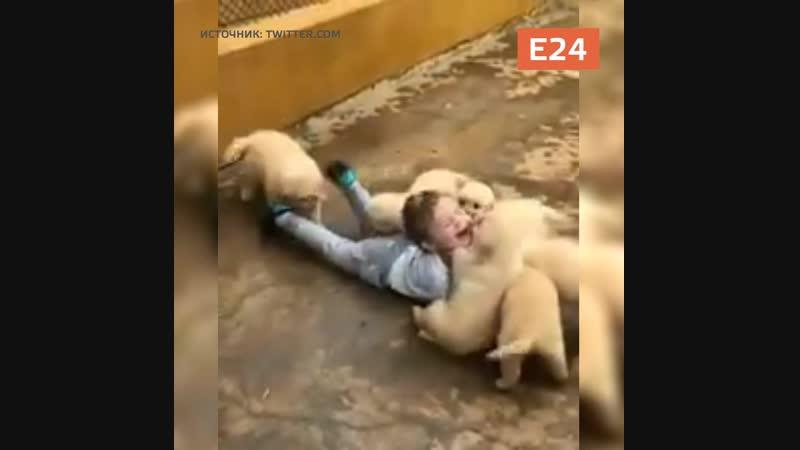Стая собак напала на ребёнка!