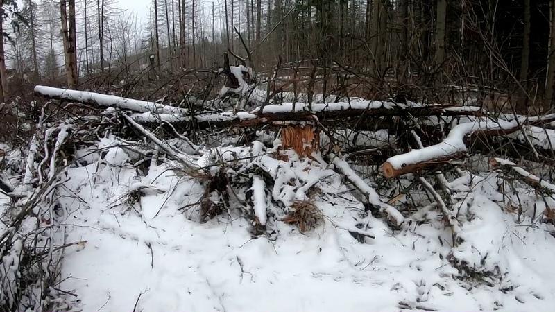 Вырубка леса и постройка складов Химки, Сходня, Гучковка