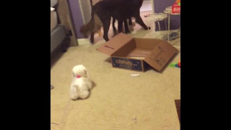 Эй, мужик... игрушки могут быть страшными!