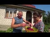 Огромная ежевика, мудрю с кабачками))) 05.08.18