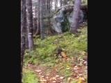 ...Сильные ветры заставляют лес Квебека