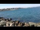 Собаченция и море