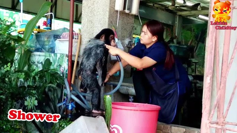 Ever seen Shower and brush teeth to the Chimpanzee
