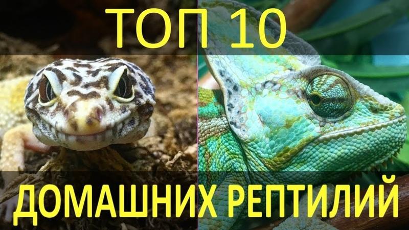 ТОП-10 РЕПТИЛИЙ ДЛЯ ДОМА! Какие рептилии лучшего всего подойдут для домашнего содержания!