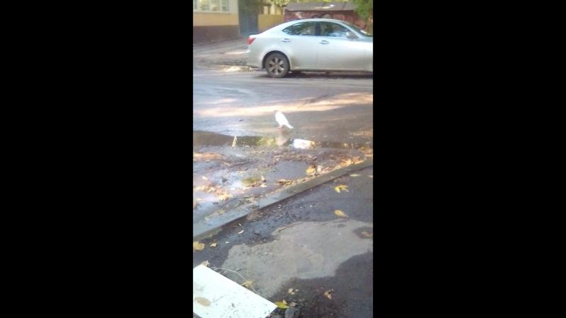 Белая ворона существует очень милая и действительно вся Белая даже клюв