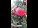 Экзотические цветы...