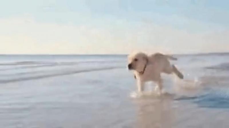 Пусть счастье бежит за вами как верный пёс