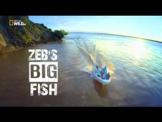 Большие рыбы Зеба Хогана. Нашествие акул-молотов / Zeb's Big Fish