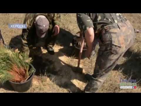 На Херсонщині посадили дерева за африканським методом