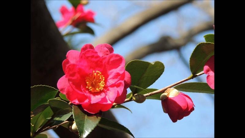 J.シュトラウスII世 ワルツ 「美しく青きドナウ」 Op.314[ナクソス・クラシッ