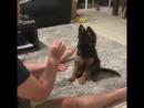 собакен с огромными ушами