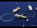 Погранслужба взяла под охрану все рыболовецкие суда России в Азовском море