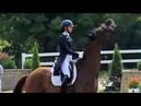 Do Horses Hate Heather Blitz Flies Or F**K Off