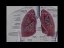 Monaural Pure Organ Lungs 220HZ