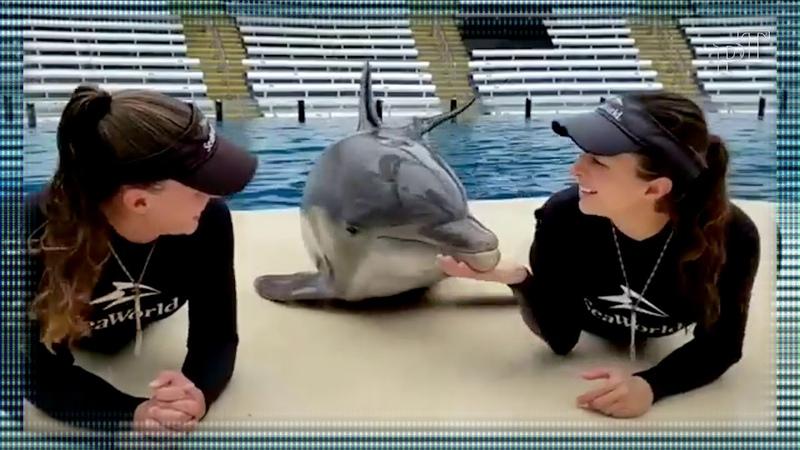 Le dauphin embrasse les filles