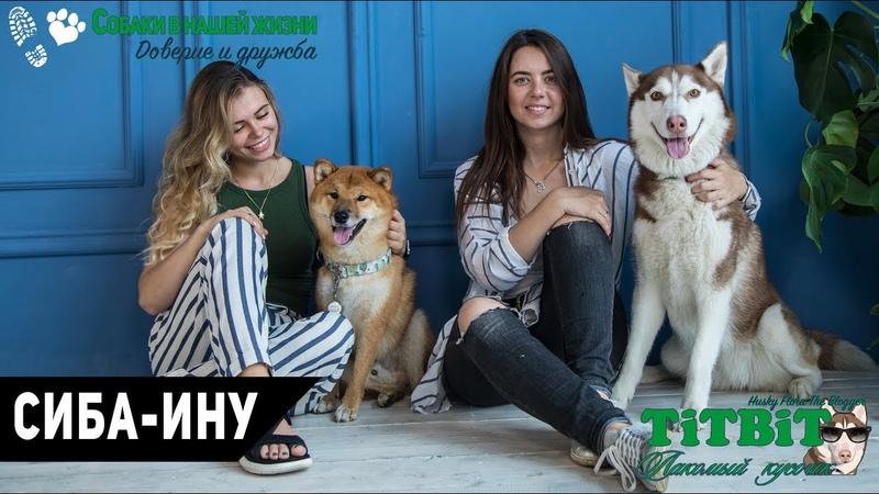 Собаки в нашей жизни: Интервью 7 (Сиба-Ину - характер, уход и воспитание)